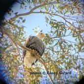 eagle-birding1-15