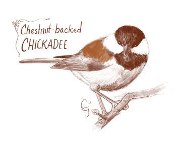 cbchickadee-caseygirard