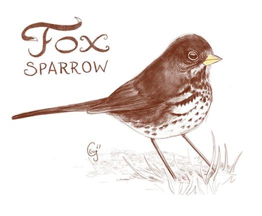 foxsparrow-caseygirard