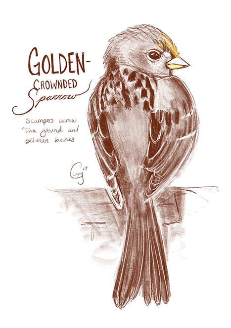 goldencrownedsp-caseygirard