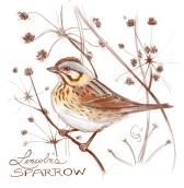 lincolnsparrow-caseygirard