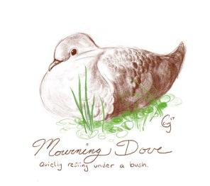 mourningdove-caseygirard