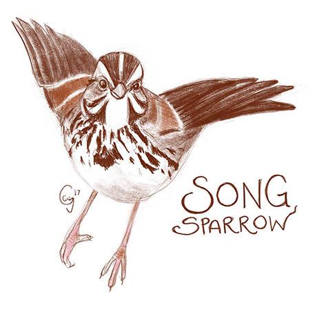 songsparrow-caseygirard