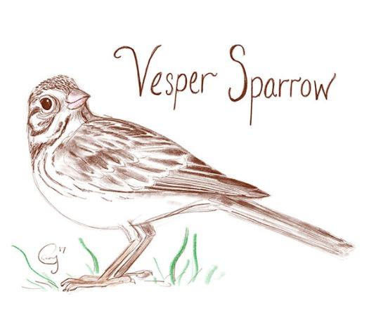 vesperspsrrow-caseygirard