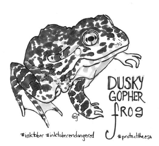 duskygopherfrog-Caseygirard