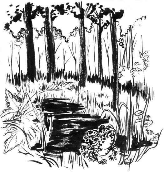 duskygopherfrog-habitat-caseygirard