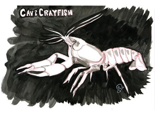 11-cavecrayfish-caseygirarda