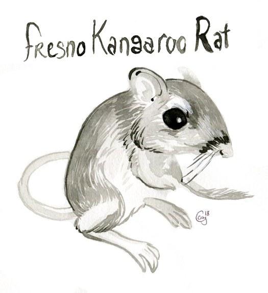 14 FresnoKangarooRat-caseygirard