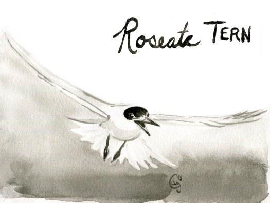 17 roseatetern-caseygirard