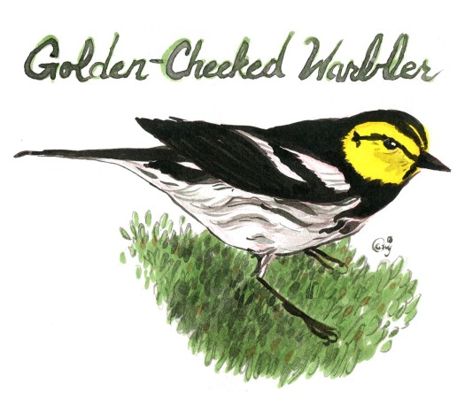 20Golden-cheekedwarbler-caseygirard-1