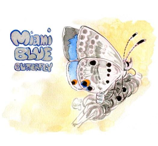 21MiamiBlueButterfly-caseygirard
