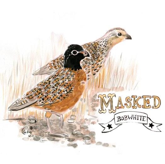 23MaskedBobwhite-caseygirard