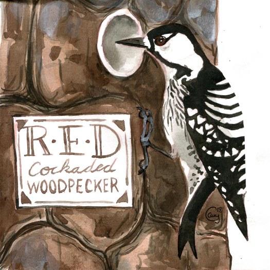30RCWoodpecker-caseygirard
