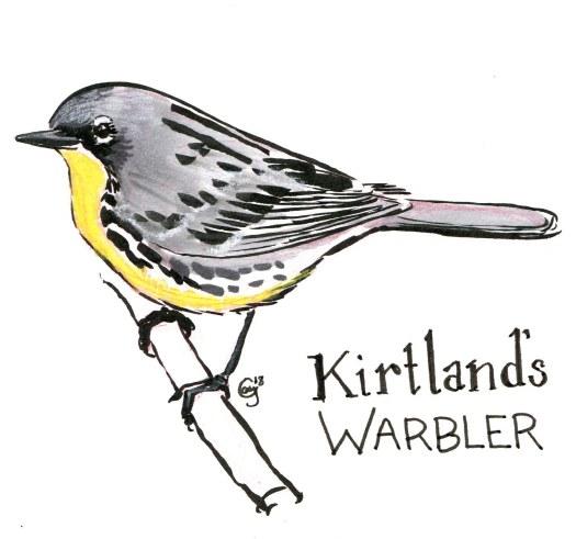 kirtlandwarbler-caseygirard